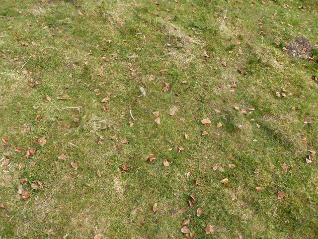 lots of cedar seeds