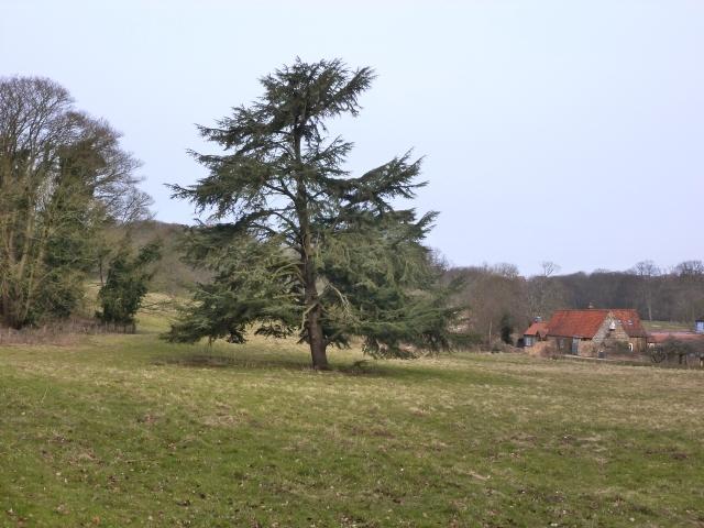 Cedar Meadow