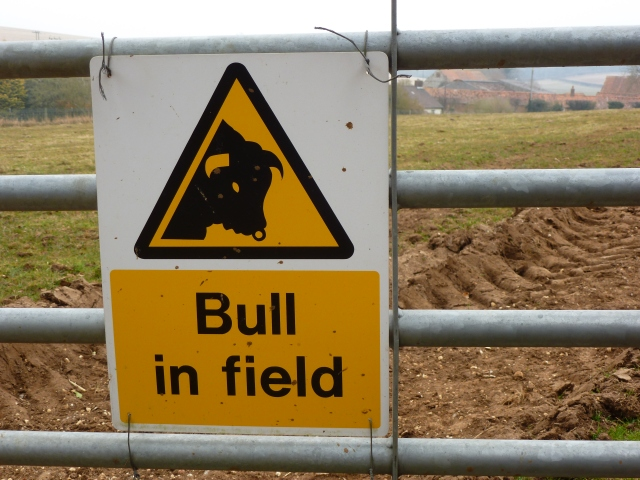 Whatever happened to Beware of the Bull?