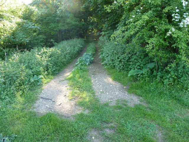 The path to the wood