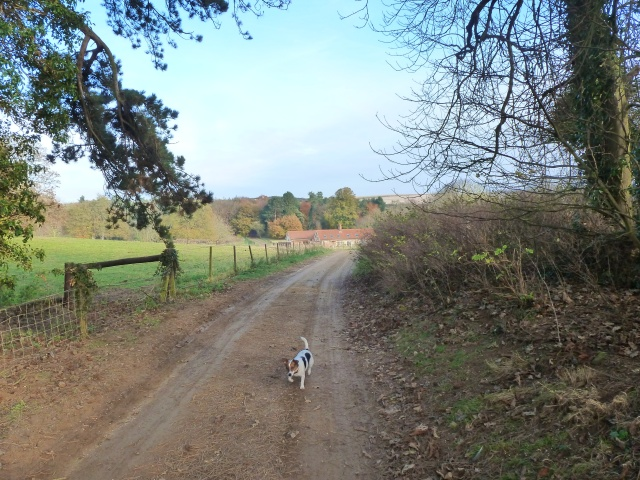 The path to my cottage and the little dog Hesper