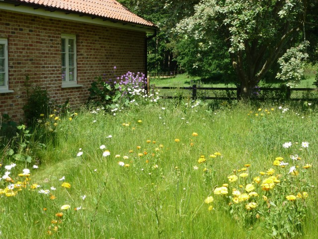 the wild flower meadow